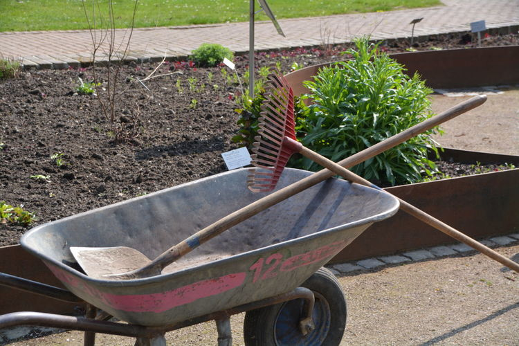 Rake and shovel in wheelbarrow by plant in garden