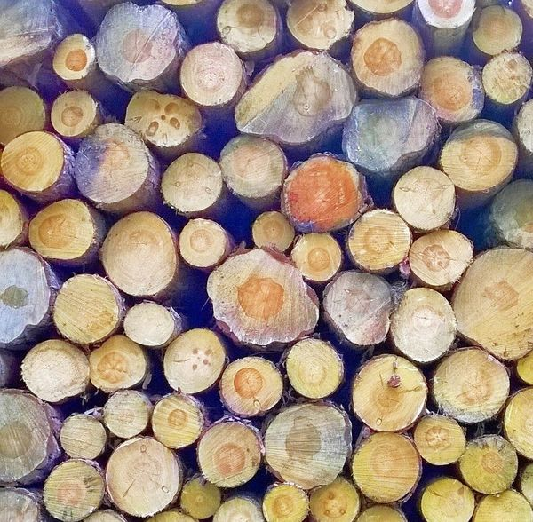 Wood Timber Lumber Destruction Pine Trees Nature_collection Logging Chopsticks WoodLand Timber Stack
