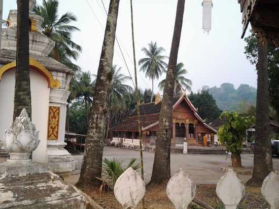 Temple Palm Trees Luang Prabang Laos Street Photography Travelshots Southeast Asia Peaceful RooftopStreetphotography Travel Travel Photography