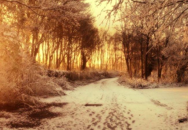 Winter Beautiful winter morning in 2013 IPhone