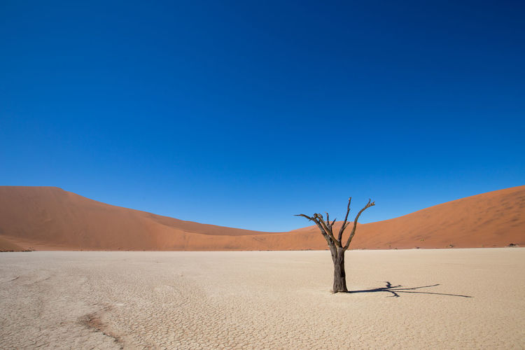Arid Climate Atmospheric Beauty In Nature Blue Clear Sky Climate Copy Space Day Dead Plant Desert Environment Land Landscape Nature No People Non-urban Scene Outdoors Remote Sand Sand Dune Scenics - Nature Sky Tranquil Scene Tranquility