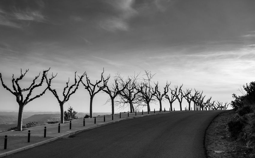 Bare trees on roadside against sky