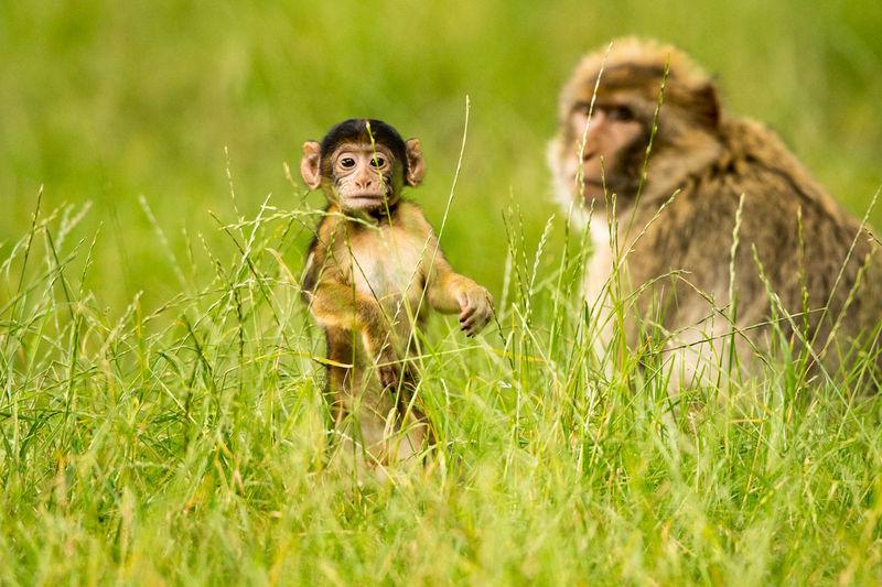 Monkeys sitting on field