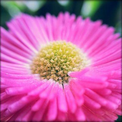 Macro di Primavera M'ama o non m'ama !!! EyeEmBestPics EyeEm Best Shots Flowers Flowers_collection Flowerporn