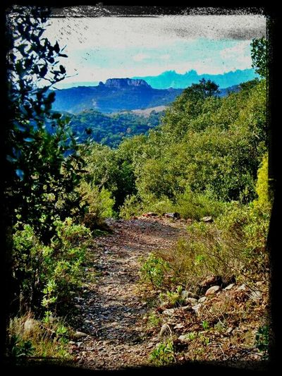 Nature Mountains Catalunya Montserrat Descobreixcatalunya Eye4photography  Sant Llorenç Del Munt