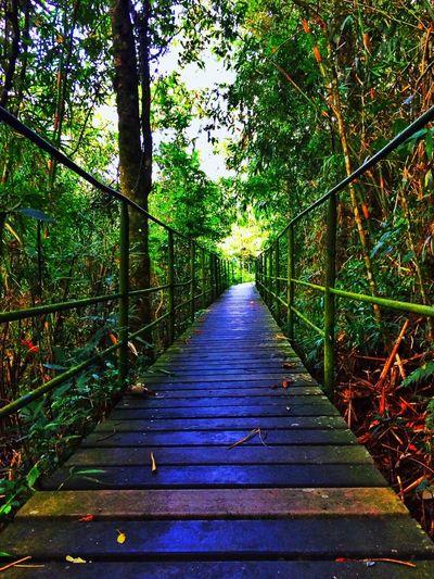 Walkway leading towards trees