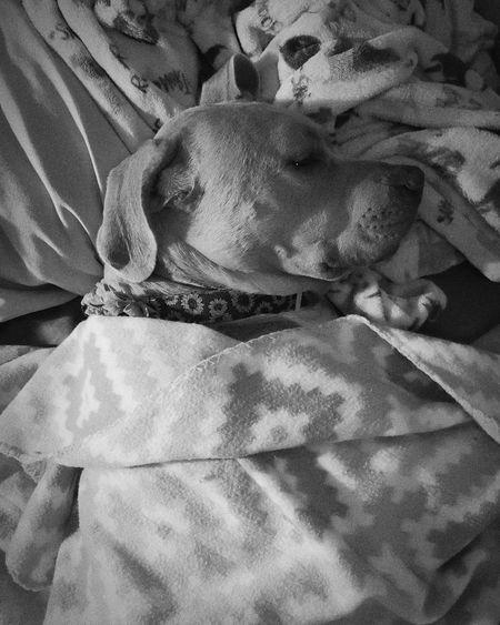 High angle view of dog sleeping on bed