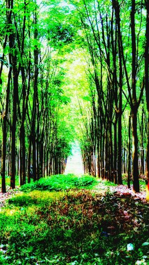 Green Color Growth The Way Forward Beauty In Nature Tree Outdoors Day No People Grass Landscape Nature Sadang