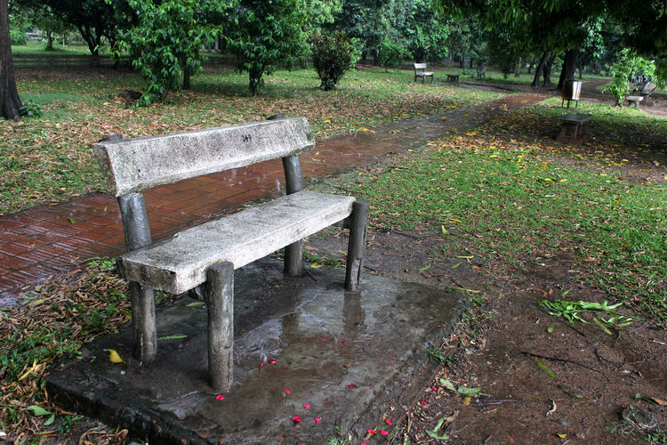 Plant Tree Seat Bench Nature Park Growth Green Color Grass Day Tranquility Park - Man Made Space No People Empty Park Bench Outdoors Land Absence Leaf