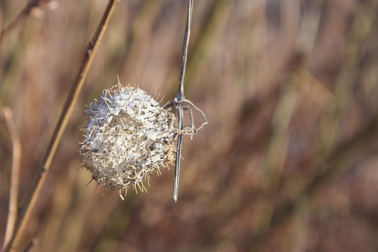 Dried Plant Close Up Macro Photography Focus On Foreground Blury Background Nature_collection Nature Photography Beauty In Nature