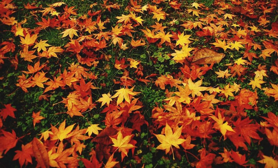 Autumn Colors Of Autumn Autumn Leaves Relaxing Green Green Green!  Leaves Orange Leaves