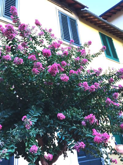 Flower Architecture Purple No People Outdoors Blooming Italy First Eyeem Photo