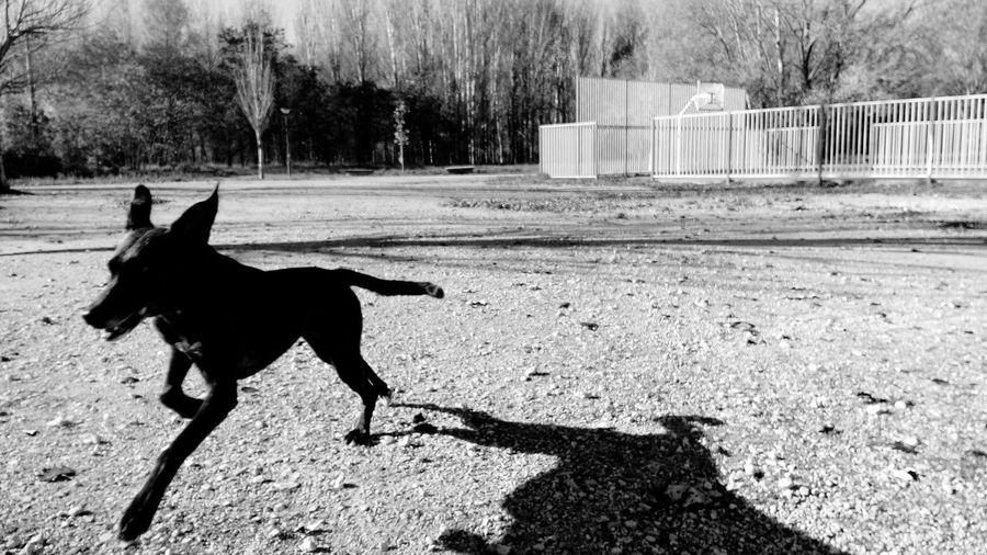 Burgos -España- España🇪🇸 España Burgos THESE Are My Friends Black And White Blackandwhite Blackandwhite Photography I Love My Dog
