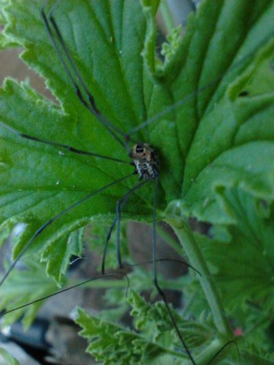 Nature_collection Itsy Bitsy Spider The Beauty In My Gardens Macro_collection My Smartphone Life