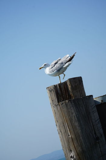Bird Brave Marked Seagull Strenght Survival