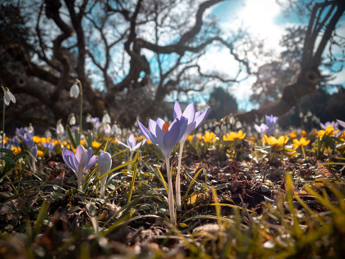 Plant Flower Flowering Plant Beauty In Nature Growth Freshness Vulnerability  Fragility Petal Nature Selective Focus Land Close-up Tree Iris Day Crocus Field No People Outdoors Flower Head