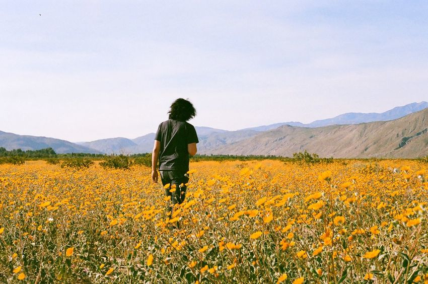 Walking through flower fields in California during the superbloom on film Natural Natural Beauty Beauty In Nature Beatifulday Beautiful Superbloom Flower Fields Flower Field California EyeEm Selects Mountain Field Nature Rear View Flower Landscape Beauty In Nature One Person Growth Plant Walking Scenics Hiking Real People Backpack Tranquil Scene Day Sky Mountain Range Adventure EyeEmNewHere
