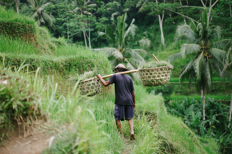 Rear view of woman working at farm