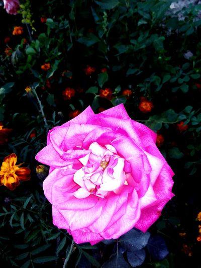 Roses Green Love ♥ Enjoying Life Hello World First Eyeem Photo