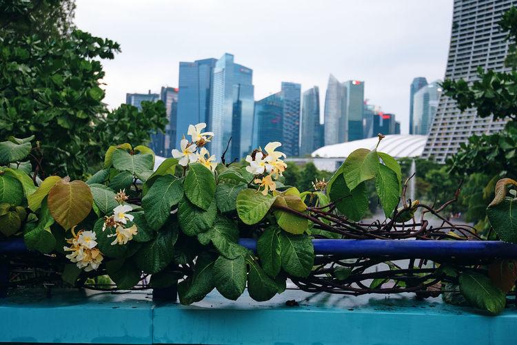 Plants by buildings against sky in city