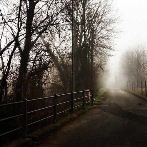 Road leading to Casa La Pace. Italy Ghivizzano Tuscany Trees