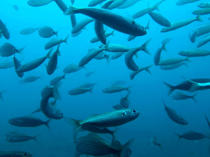 Beauty In Nature Below Day Fish Holidays Large Group Of Animals Multi Colored Nature No People Ocean Outdoors Scuba Diving Sea Sea Life Summer UnderSea Underwater Water