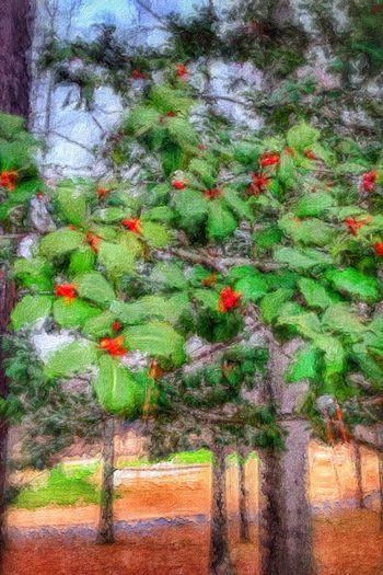 IPSPaint Painterly Brushstroke IPhone5 Snapseed NEM Painterly