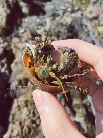 What a nice surprise :D Beach Life Kiwi Life Nature Hermit Crab Somewhere In New Zealand