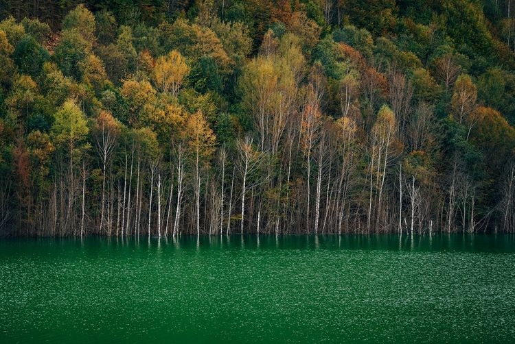 Scenic view of forest and lake during autumn