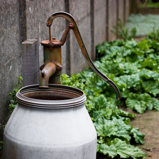 Ecological Gardening Front Or Back Yard Gardening Green Color Groundwater Growingvegetables Growth Old Outdoors Rhubarb Waterpump