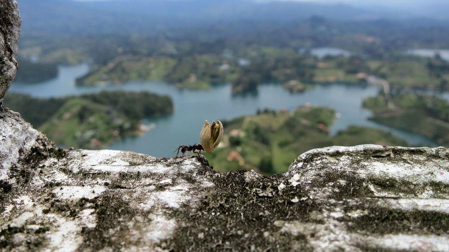 Macro Shot Of Ant Carrying Pistachio Peel On Rock