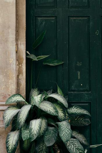 Plants Plants 🌱 Close-up Door Green Color Leaf Minimalism Nature No People Plant