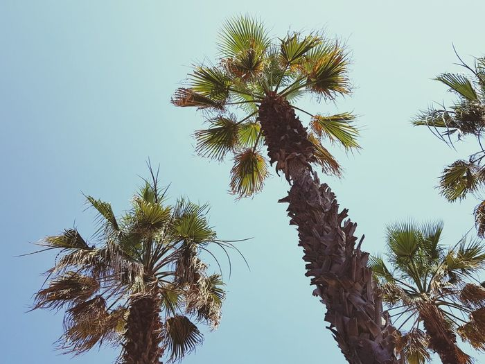 Tree Sky Nature Blue No People Low Angle View Beauty In Nature Day Travel Cloud - Sky Tree Nature Branch Outdoors Clear Sky Palm Tree Close-up