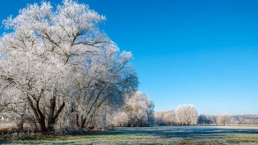 Winterland Nature Tree Blue Beauty In Nature Clear Sky Scenics Outdoors Growth Day Water No People Branch Freshness Sky