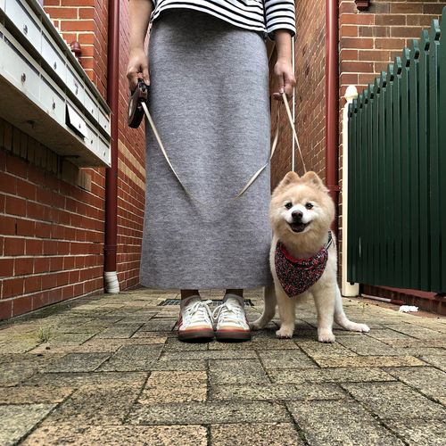 Man holding dog standing on footpath