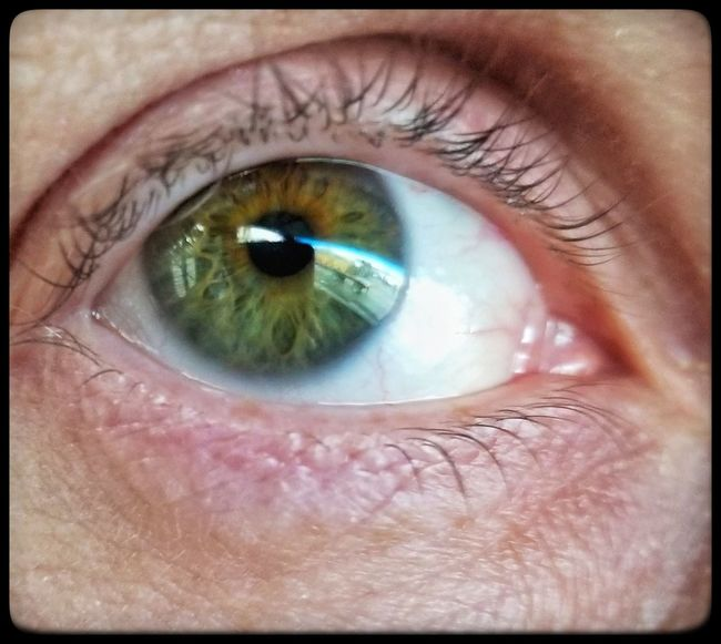 Human Eye Eyelash Human Body Part Eyesight One Person Eyeball Iris - Eye