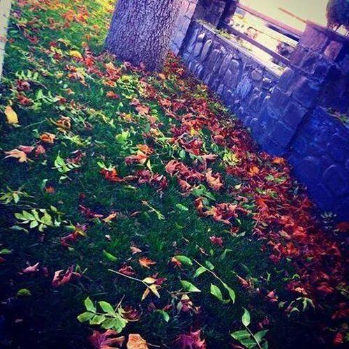 Azerbaijan.Gakh.autumn