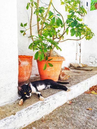 Cat Skiathos