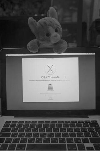 Приключения упоротого кота упоротый кот OS X Yosemite