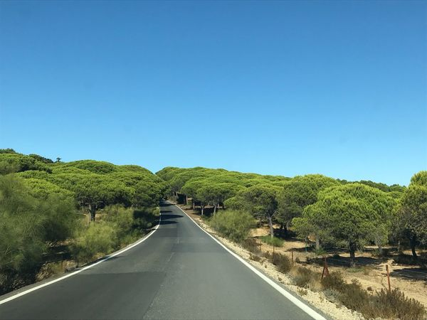Pinar Sky Tree The Way Forward Road Direction Beauty In Nature