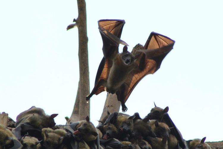 Capture The Momentment Batman Bat Fledermaus Wildlife Wildlife & Nature