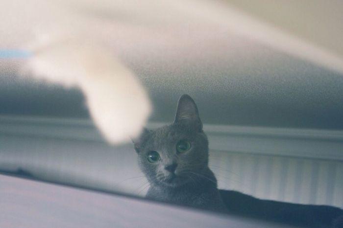 이리 내려와봐, 놀자 나랑