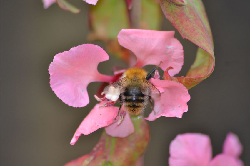 Taking Photos BeesDoingTheirBit Nature On Your Doorstep MyBackGarden