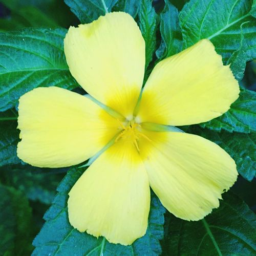 Yellow Freshness Petal Flower Flower Head Nature Fragility Close-up Beauty In Nature No People Day Outdoors