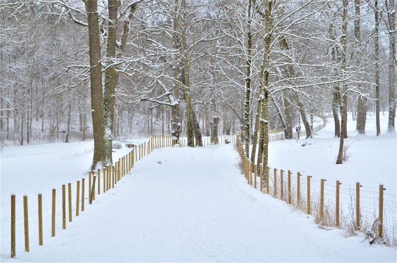 Snow Cold Temperature Winter Tree Bare Tree Tranquility Fence Plant White Color Barrier Boundary Tranquil Scene Nature Direction Land No People The Way Forward Beauty In Nature Trunk Diminishing Perspective Extreme Weather Outdoors Treelined Snowing