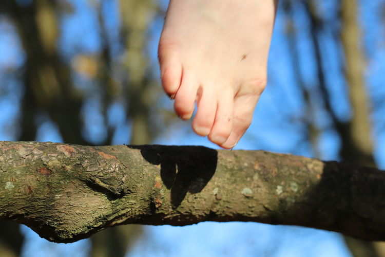 Close-up of human hand against tree