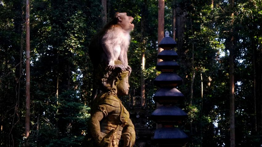 Bali - Obyek Wisata Bukit sari Sangeh Bali Monkey Sangeh Balispirit Jeanmart Bali 16:9 Verybalitrip Very Bali Trip