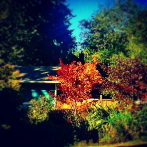 Fall Colors Fall Leaves Popular Popular Photos