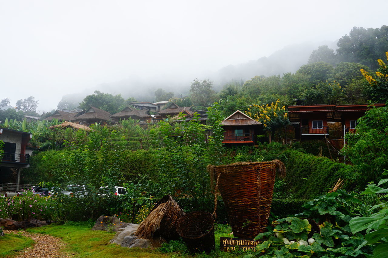 mountain, outdoors, fog, nature, built structure, no people, tree, architecture, building exterior, day, landscape, scenics, beauty in nature, plant, domestic animals, sky, mammal, animal themes