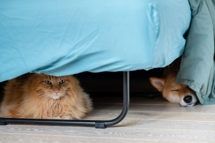 Cute cat and shiba inu dog sleeping on wooden floor in room nordic furniture. cozy vibes